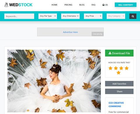 Stock Video & Photo Theme for WordPress - WP Solver